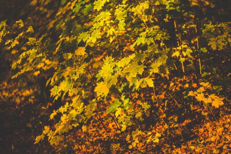 fall, photography, busy season