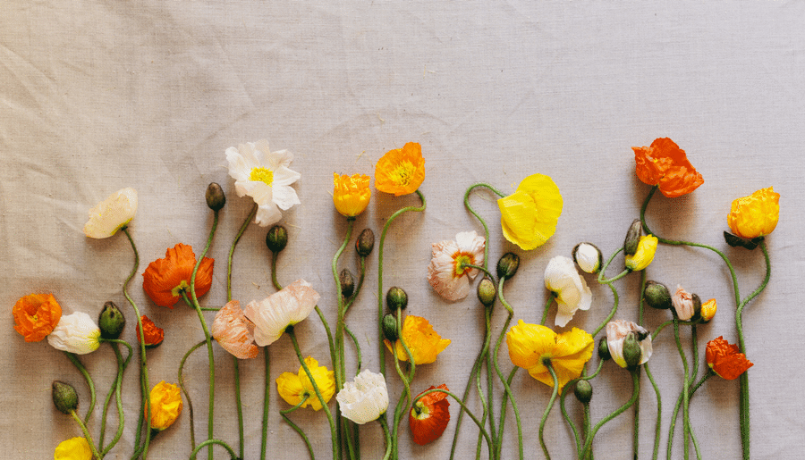 8 Ways to Spring Clean Your Photography Business